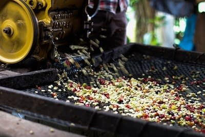 green-coffee-processing-methods-achilles-coffee-roasters