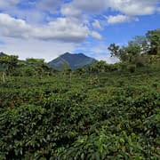 Guatemala Coffee Cultivation Mountains