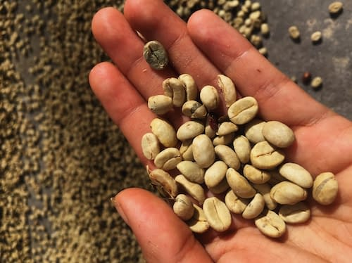 Achilles Coffee Roasters Costa Rican Coffee