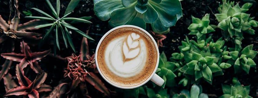 Achilles-Coffee-Roasters Coffee As An Antioxidant